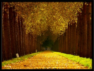 road_and_path05